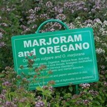 Marjoram's Cure-1 w