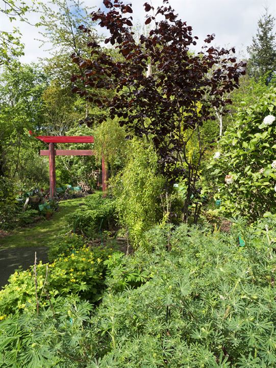 Workshops And Events Dilston Physic Garden Autos Post