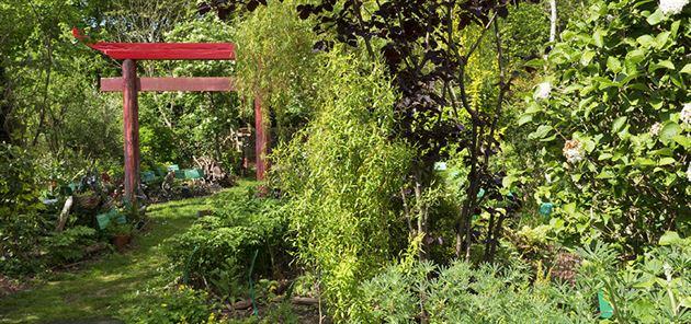 Dilston garden shots | Dilston Physic Garden | May 2016