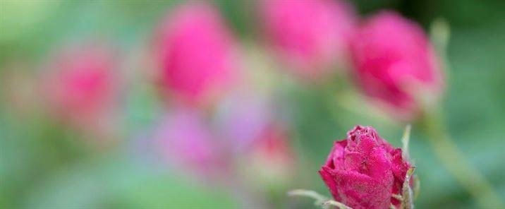 Summer uplift – Dilston Physic Garden