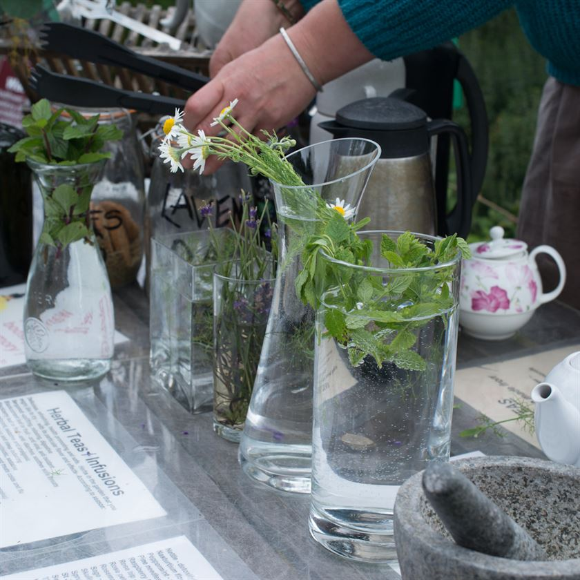 Dilston Physic Garden – Discover the secret power of the